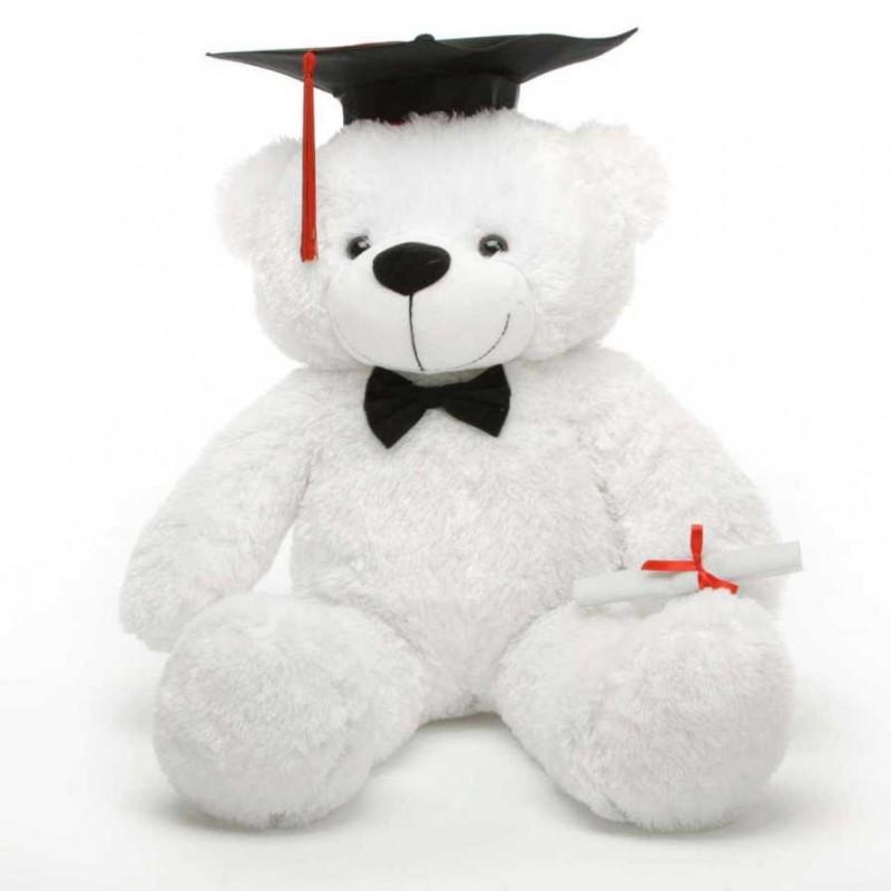 2 Feet Big White Teddy Bear With Graduation Cap And A Scroll